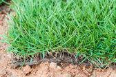 Green Grass tiles. macro. — Stock Photo