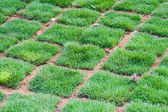 Fresh Green Grass tiles — Stock Photo