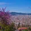 Stock Photo: Barcelona, Catalan, Catalonia, Spain,spring, architecture, view, interesting detail