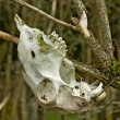 Upper jaw skull on a branche — Stock Photo #25127107