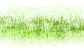 Green swamp background — Stock Photo