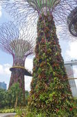The Singapore super-trees — Стоковое фото