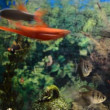 Aquarium — Stockvideo #13977006