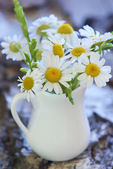 Bouquet of beautiful fresh chamomile flowers — Foto Stock