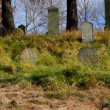 Wind on autumn in the Old Jewish cemetery1 — Stock Video