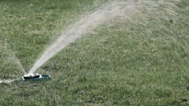 A sprinkler watering green lawn — Stockvideo