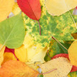 Color composition from autumn leaves — Stock Photo