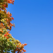 Colorful autumn leaves on tree against blue sky — Stock Photo #13597775