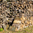 Wood in pile outdoor — Foto Stock