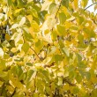 Sunlight goes through autumn green and yellow leaves — Photo