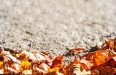 Dry autumn leaves background — Stock Photo