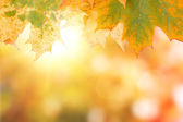 Autumn maple leave background with boked — Stock Photo