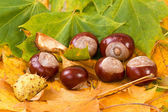 Colorful autumn leaves and chestnuts — Stock Photo