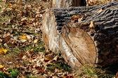 Block of wood and autumn foliage — Stock Photo
