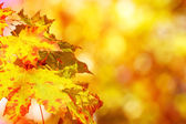 Autumn background with boked — Stock Photo