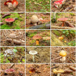 Twelve summer mushrooms in one collection — Stock Photo #13902212