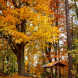 Autumn in park with yellow leaves on ground — Stock Photo