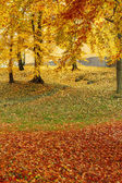 Color composition in autumn park — Stock Photo