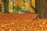 Autumn colors in park — Stock Photo