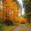Stock Photo: Autumn road in forrest