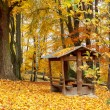 Stock Photo: Autumn in park with yellow leaves on ground