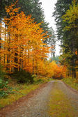 Autumn road in forrest — Stock Photo