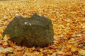 オレンジ色の赤と緑の葉とボールダー — ストック写真
