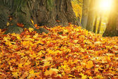 Autumn colors with sun light in park — Stock Photo