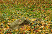 Oranje en rode herfst bladeren vallen op groene grond — Stockfoto