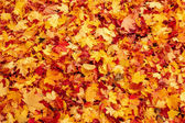 Caduta foglie autunnali arancione e rossi sulla terra — Foto Stock