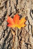 Herbstlaub über hölzerne hintergrund — Stockfoto