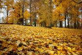Bodegón otoñal con hojas de arce amarillo — Foto de Stock