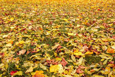 Oranje en gele herfst bladeren vallen op grond — Stockfoto