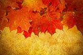 Foglie d'autunno grunge rosso telaio — Foto Stock