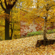 Color composition in autumn park — Stockfoto