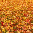 Royalty-Free Stock Photo: Fall orange and red autumn leaves on ground