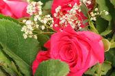 Detail der frischen rosa rose — Stockfoto