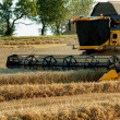 Yellov combine on field harvesting gold wheat - Stock Photo