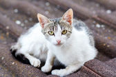 Close up front view of cat on tile roof — Stock Photo