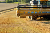 Yellow harvester combine on field harvesting gold wheat — Stockfoto