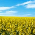Beautiful summer rural landscape — Stock Photo #25549697