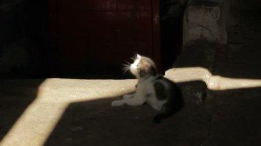 Little kitten playing — Stock Video