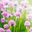 Chive herb flowers on beautiful bokeh background — Stock Photo