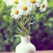 Daisy flower in the vase with shallow focus — Stock Photo