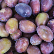 Acid purple and green Plums (Blackthorns) — Stock Photo