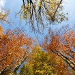 Autumn trees on blue sky — Stock Photo