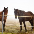 Two brown horse in enclosure — Stock Photo #35636325