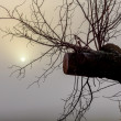Misty morning sunrise over tree — Stock Photo