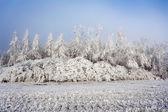 Sunny frozen landscape — Stock Photo