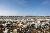 Winter background with frost grass and snowdrift barrier — Stock Photo